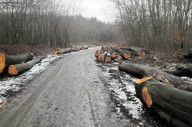Názor  súd pozastavil výrub stromov v dúbravke - stromy dubravka ca4b7bf548a