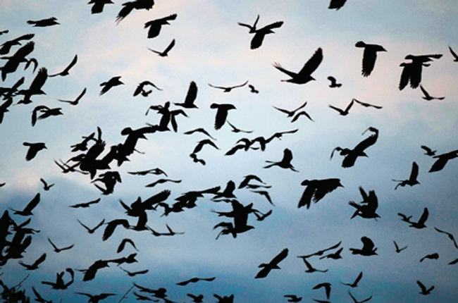 Veľké vtáky stále tvrdo