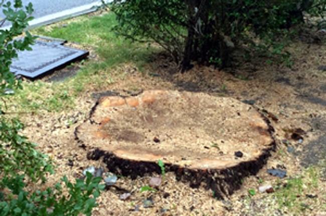 Vyrúbali stromy 73d553a6c31