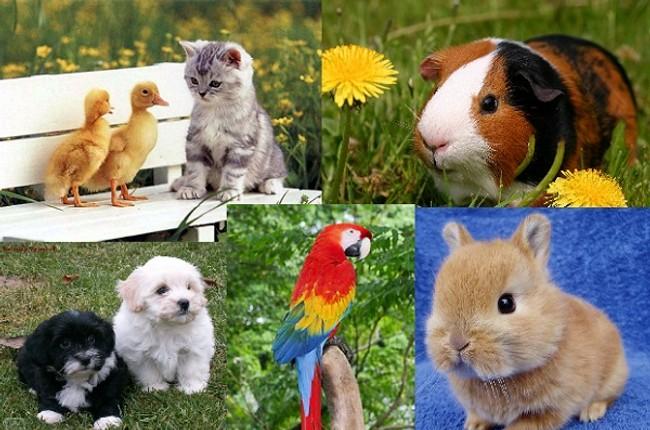 Karlova ves bude v sobotu hľadať najmilšie domáce zviera - Zvieratka 2af41362219