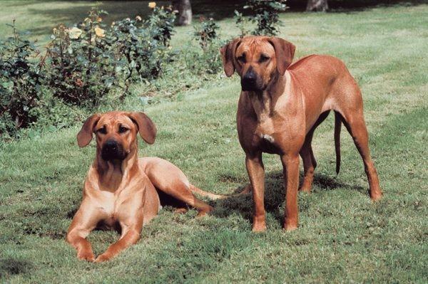 V Bratislave sa uskutočnia medzinárodné výstavy psov Danube duo Cacib  5d466734b68